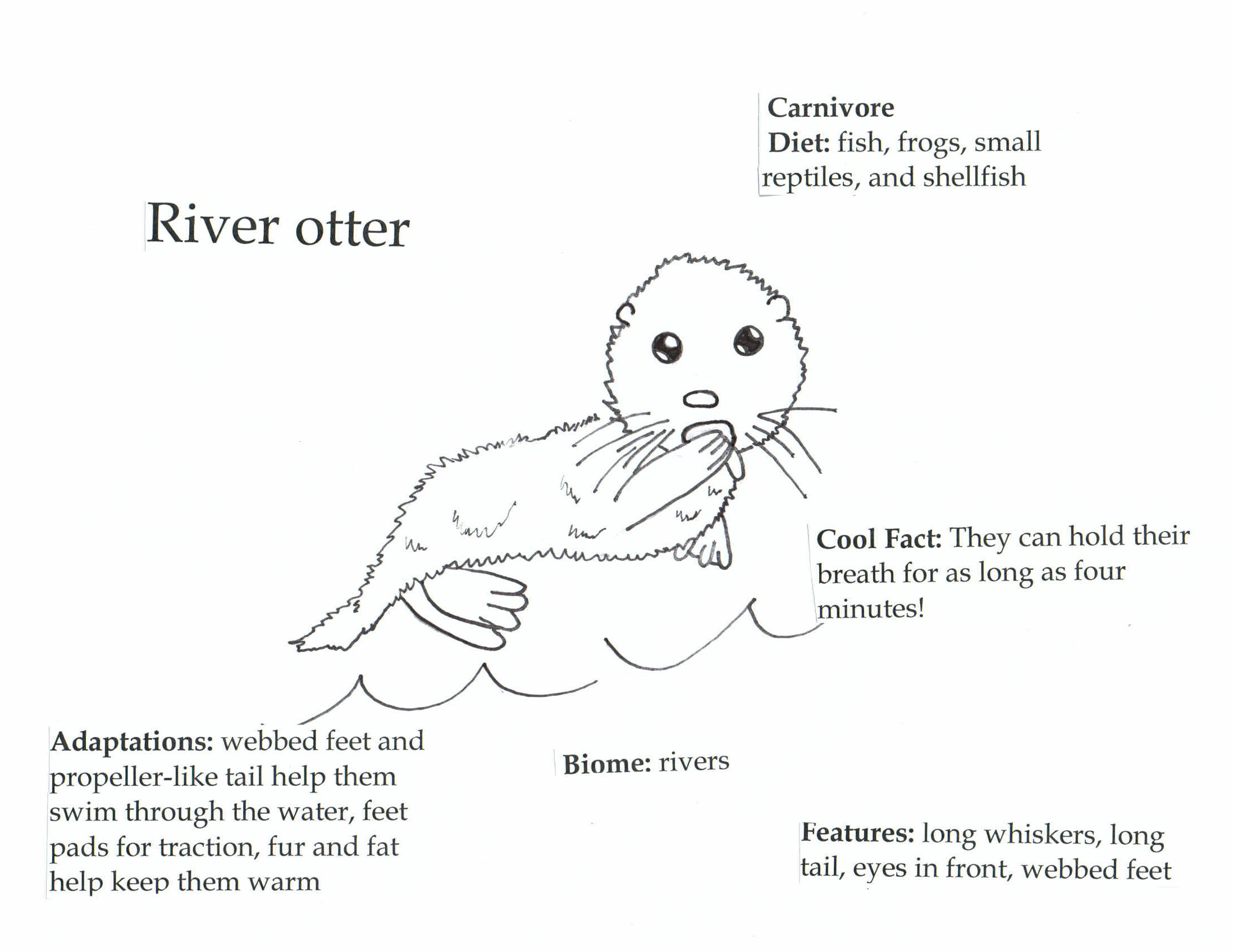 River Otter | Creature Coloring